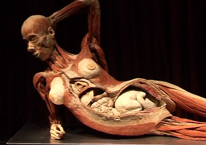 "In Israel the exhibition of ""Human Bodies"" is canceled"