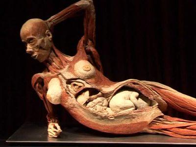 """A Israel es cancel·la l'exhibició de """"Human Bodies"""""""